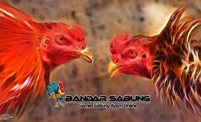 Trend Ayam Bangkok Aduan Yang Tak Pernah Redup - Sabung Ayam Online