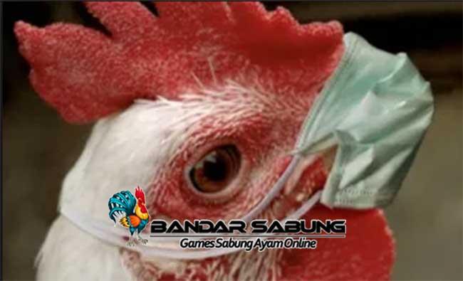 Cara Mengatasi Penyakit pada Ayam Ternak
