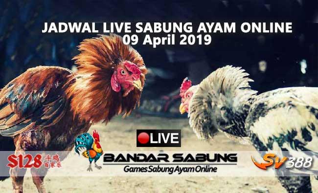 jadwal sabung ayam online s128 dan sv388 09 april 2019