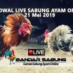 Jadwal Sabung Ayam Online S128 Dan SV388 21 Mei 2019