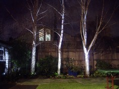 Rear garden, cube lights in Winter