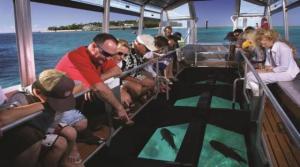 kapal wisata bottom glass