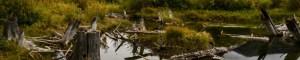 Vermillion Lake Banff National Park