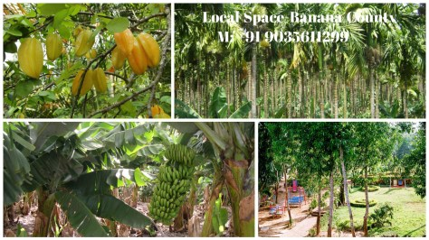 Banana County Nature