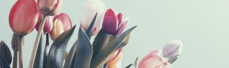 Yet Leafless, The Tulip Tree Readies to Flower