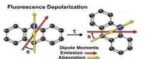 depolarisation