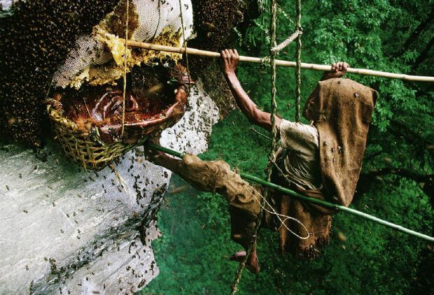 gambar pemandangan unik pemburu madu bekerja