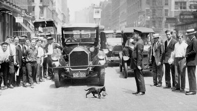 police stopped nyc traffic for a cat