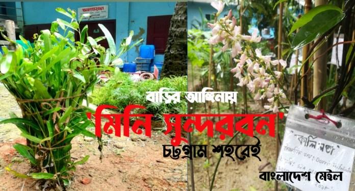 'মিনি সুন্দরবন'