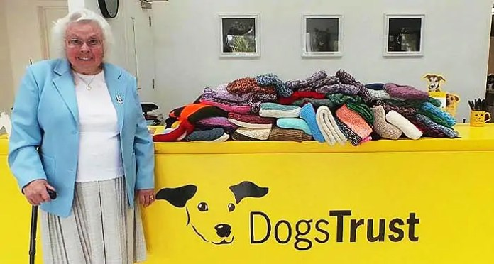 knitting for shelter dogs