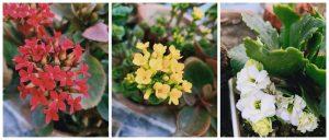 Dolon terrace garden flowers