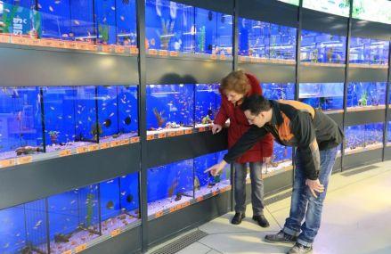 Cat cheltuie romanii pentru un acvariu?