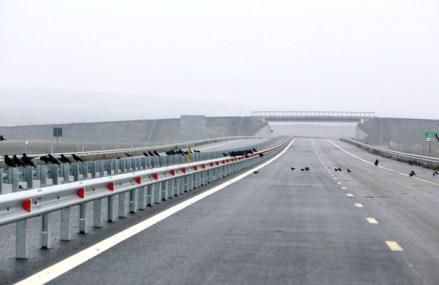 Boloş a propus Comisiei Europene eliminarea gândacului de pe autostrada Sibiu-Piteşti cu feromoni