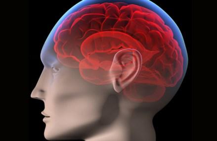 Şi-au atins oamenii nivelul maxim de inteligenţă? Ce se va întâmpla cu creierele oamenilor în viitor