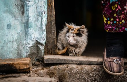 Unul din trei români este supus riscului de sărăcie şi excluziune socială
