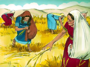 Ruth gleans in Boaz's field