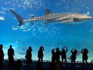 Банк Обоев: обои Люди в океанариуме фотографируют акулу ...