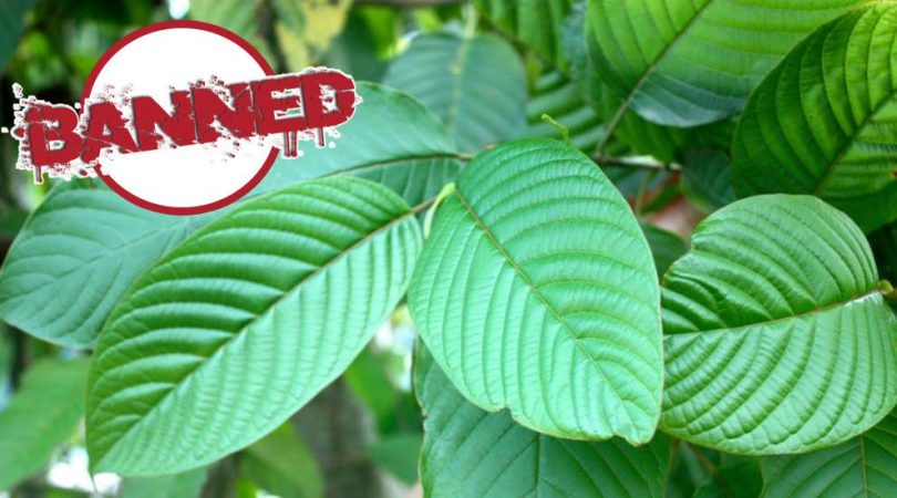 Kratom Ban | News and info on Kratom Laws