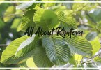 Kratom Info for New Users