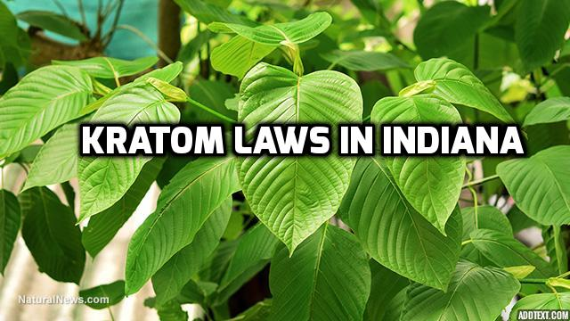 Kratom Laws In Indiana