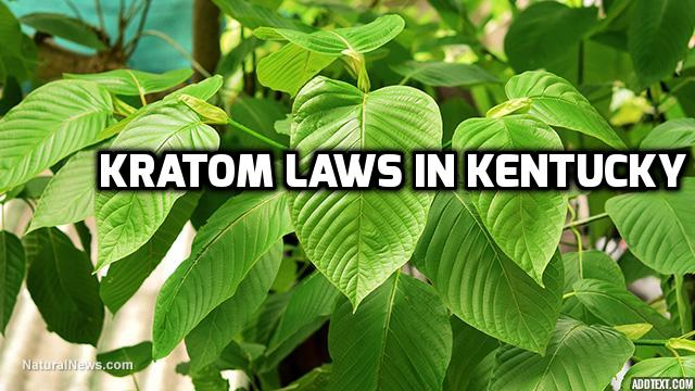 Kratom Laws In Kentucky