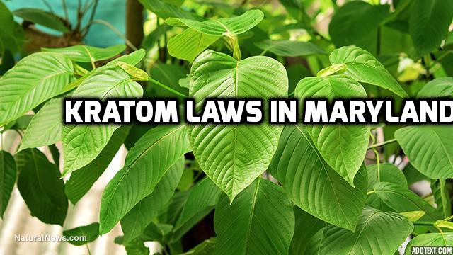 Kratom Laws In Maryland