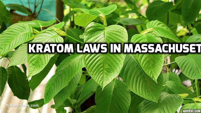 Kratom Laws In Massachusetes