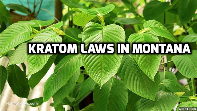 Kratom Laws In Montana