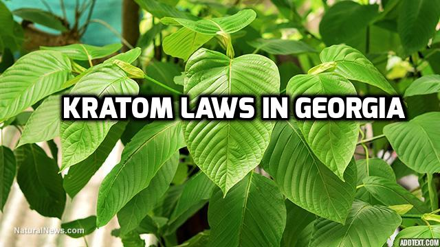 Kratom Laws In Georgia