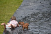 banksia-park-puppies-slip-and-slide-12