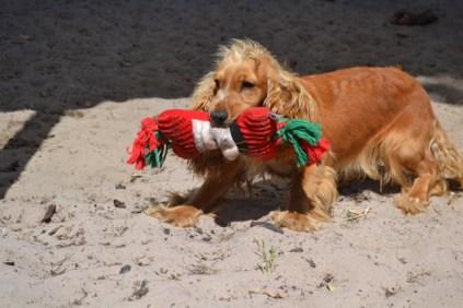 banksia-park-puppies-sand3
