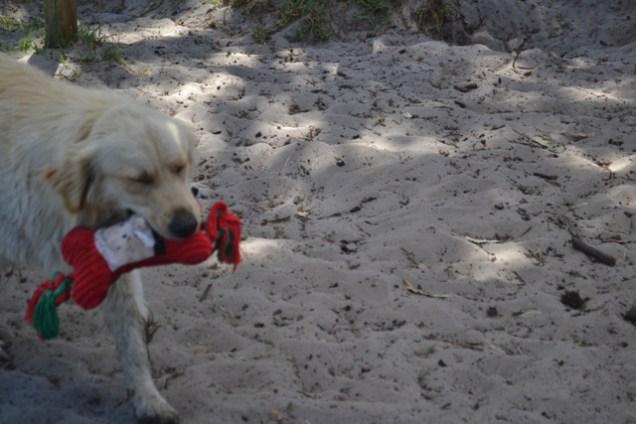 banksia-park-puppies-sand6