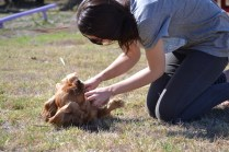 Banksia Park Puppies Playgrounds - 1 of 25 (6)