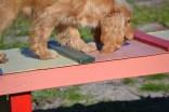 banksia-park-puppies-jazz-15-of-41