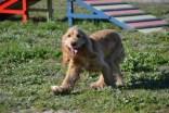 banksia-park-puppies-jazz-36-of-41