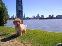 Banksia Park Puppy Review Alfred