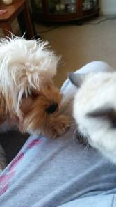 Banksia Park Puppies Lulu2