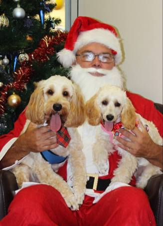 Mia Flynn Spoodles Banksia Park Puppies
