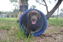 Banksia Park Puppies Meeka 15