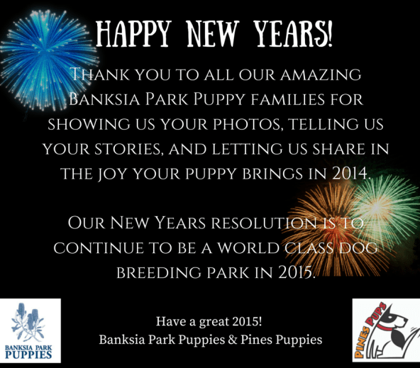 Banksia Park Puppies New Years 2015