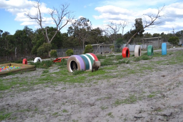 Banksia Park Puppies Ayasha - 11 of 36