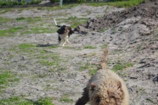 Banksia Park Puppies Ayasha - 2 of 36