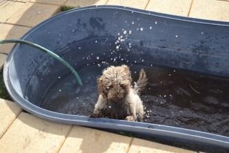 Banksia Park Puppies Ayasha - 27 of 36