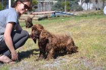 Banksia Park Puppies Bridey - 1 of 16 (4)