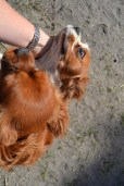 Banksia Park Puppies Ravi Lance - 44 of 47