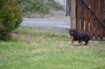 Banksia Park Puppies Rhanie