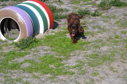 Banksia Park Puppies Walida - 18 of 26