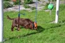 Banksia Park Puppies Walida - 22 of 26