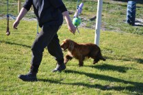 Banksia Park Puppies Wally - 12 of 13