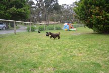 banksia-park-puppies-wanika-47-of-83